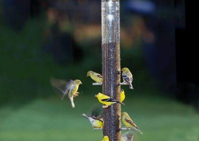bird feeders (2)