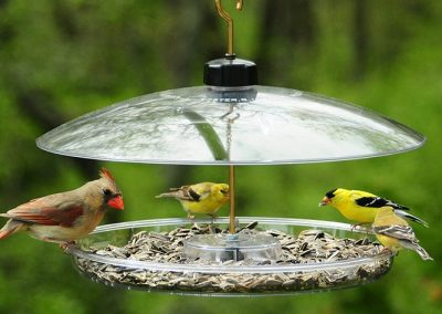 bird feeders (4)